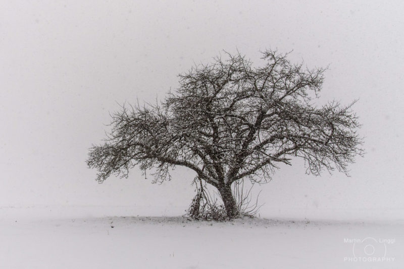 Obstbäume Fehraltorf